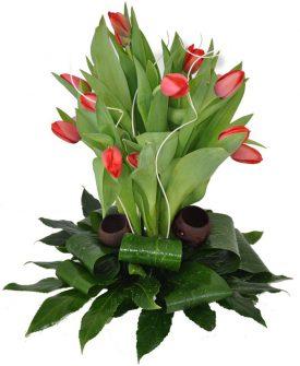 סידור פרחים טוליפים