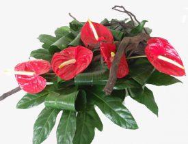 סידור פרחים מיוחד מפרחי אנטוריום