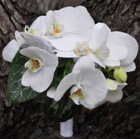 פרחי סחלב לכלה