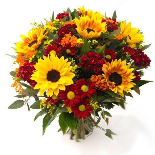 גרעיני חן החמנית - שדה פרחים משלוחי פרחים