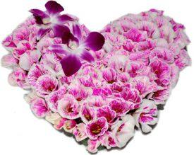 פרחים, משלוחי פרחים, משלוח פרחים