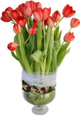סידור פרחים red tulip