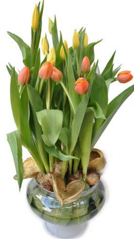 סידור פרחים מטוליפים בכלי