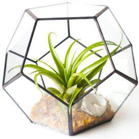 טרריום מחומש עם צמח אוויר - שדה פרחים משלוחי פרחים